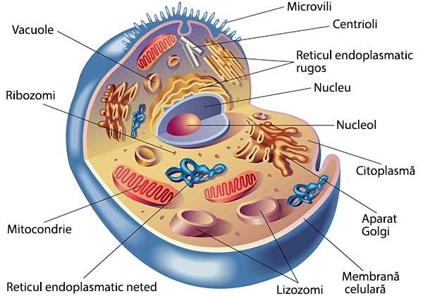 structura-celulei-eucariote