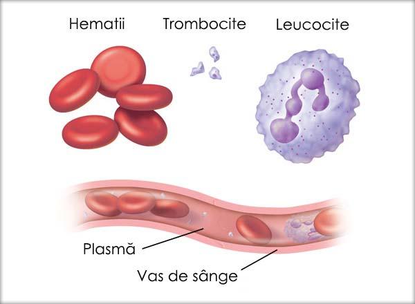 Hematii, Trombocite, Leucocite