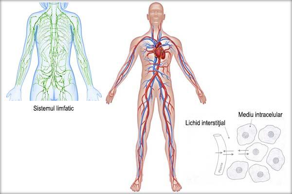 Sistemul-limfatic-Sangele-Lichidul-interstitial