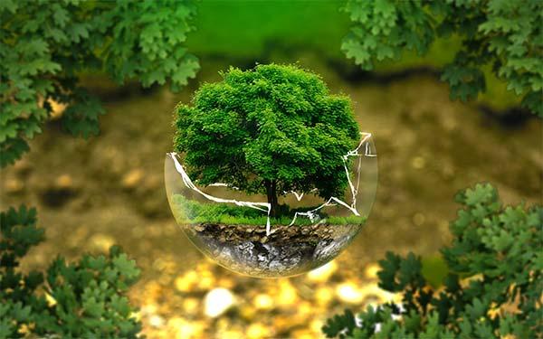 Principiile protecţiei mediului înconjurător