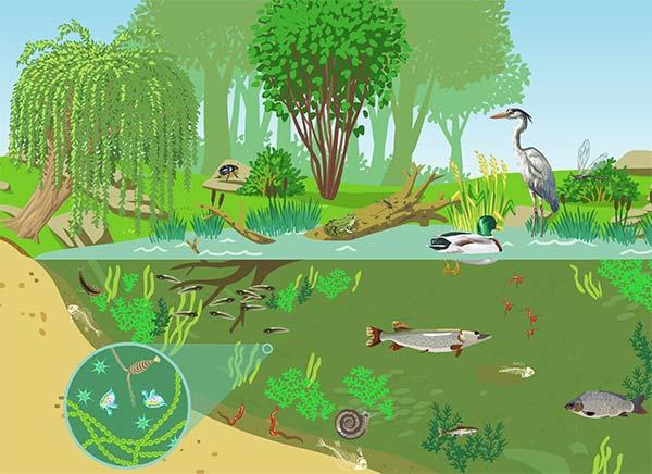 Factorii biotici, Relaţiile fitogene, Parazitismul, Relaţiile zoogene, Relaţiile biocenotice, Relaţiile biotice