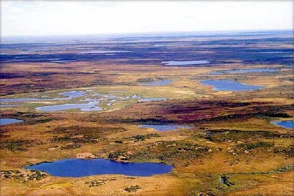 Mediul de tundră (suprafaţa, clima, anotimpurile, solurile, populaţia)