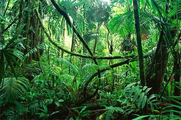 Padure-ecuatoriala